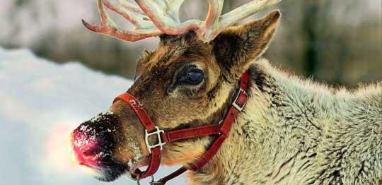 Rudolf et Les Rennes du Père Noël
