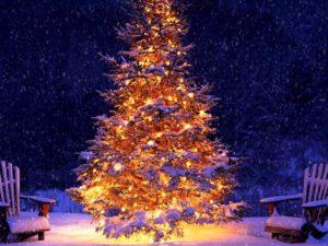 Sapin de Noël sous la Neige